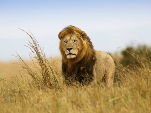 Seek the Big 5 in South Africa