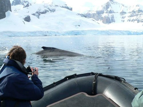 Whale watching from a Zodiac in Antarctica
